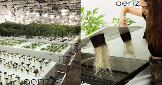 aeroponic grow table